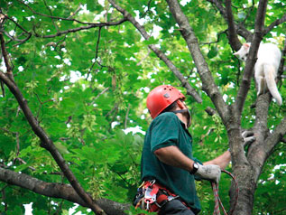 Спасение котов с деревьев